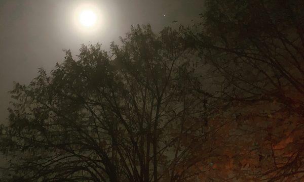 Il Plenilunio ribelle di Samhain: chi sceglie la tua direzione, tu o le tue paure?